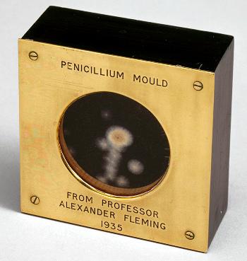 penicillin-probe